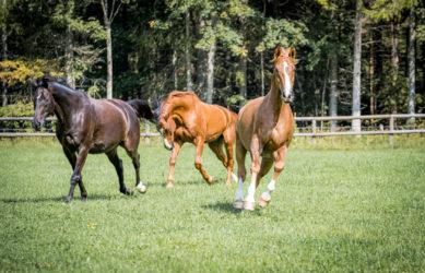 Gestüt Grünau Pferde in Bewegung